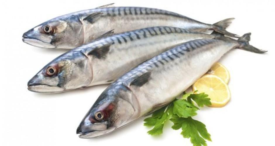 Các loại cá biển là thực phẩm giàu Omega 3 là thực phẩm giúp tăng tiết chất nhờn âm đạo