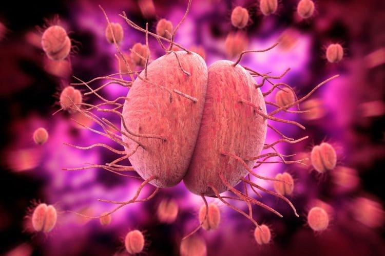 cầu khuẩn gây ra bệnh lậu có chữa được không